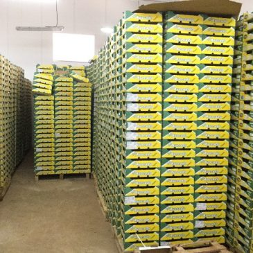 Coming Together to Boost Business: Financial Linkages Boost Avocado Processing Company in East Africa